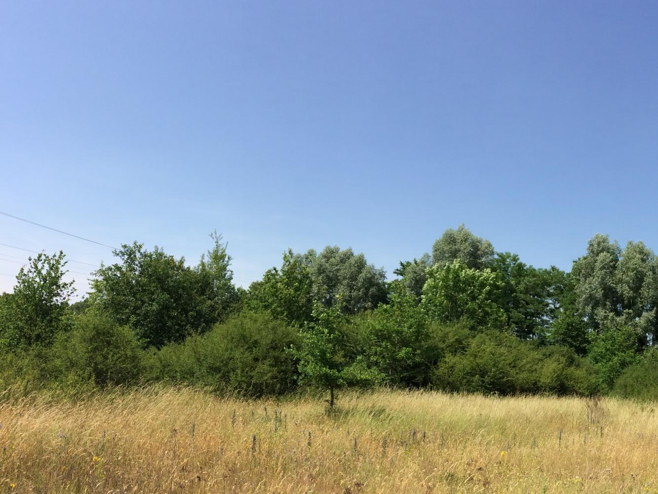 Projet de parc photovoltaïque au sol sur la commune de Dompierre-sur-Besbre dans l'Allier